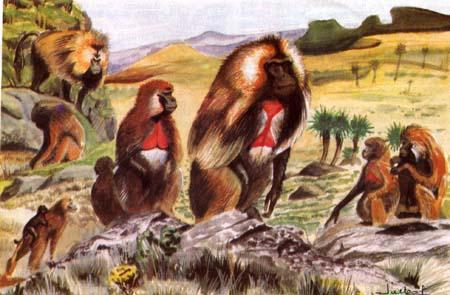Ethiopia Animals